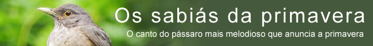 Os sabiás da primavera